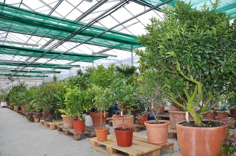 Pflanzenüberwinterung Orchideenhaus